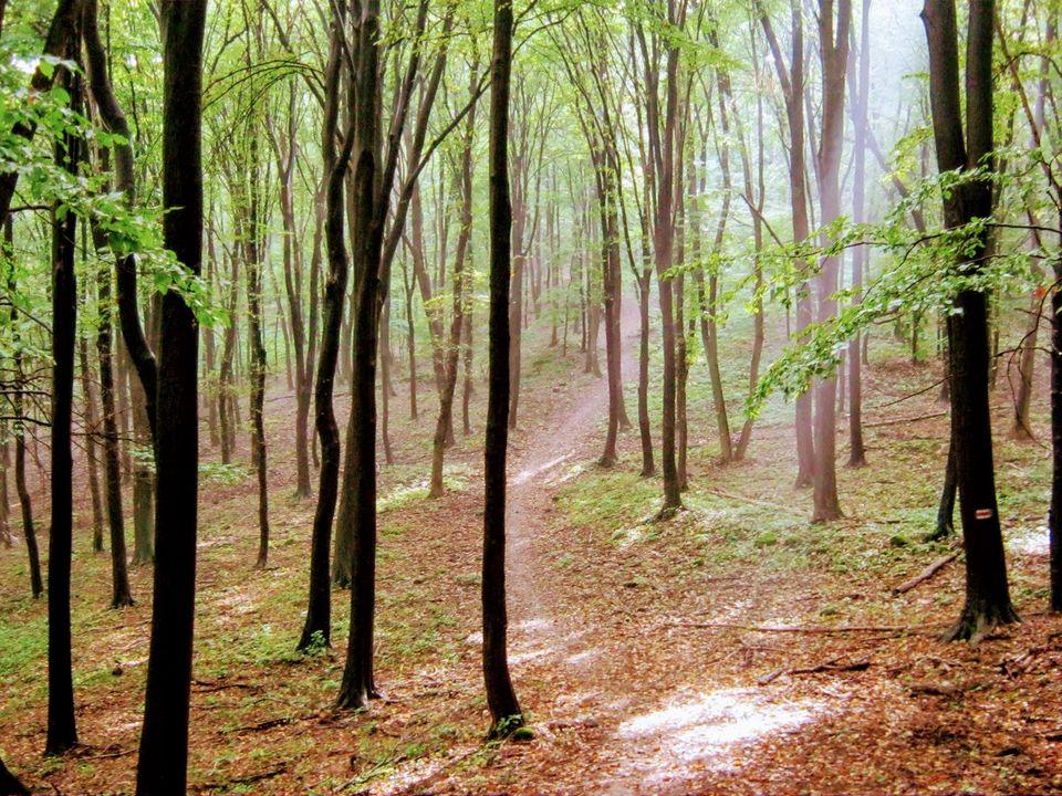 Zemplén Trail 2021 (2021-09-19)